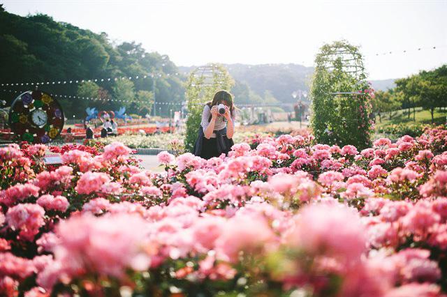Thung lũng hoa hồng Bulgaria