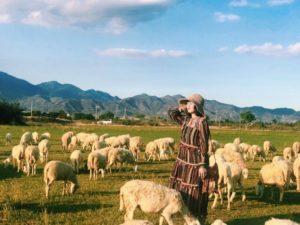 Sở hữu ngay cho mình những bức hình check - in cùng những chú cừu hiền lành